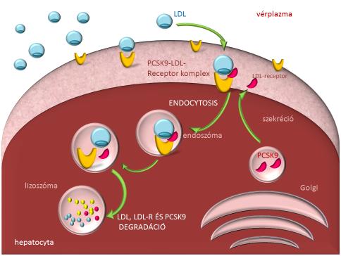 abra2 - ldl metabolizmus